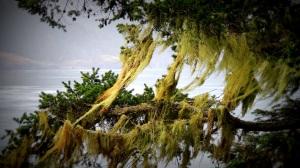 Moss01