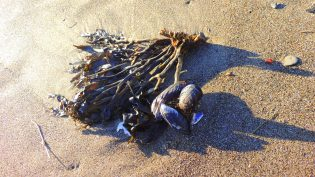 Beach Treasures 1111201401
