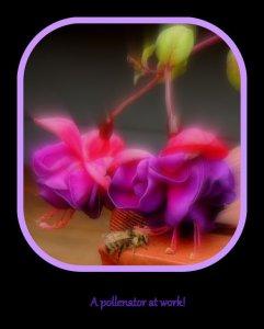 Fuzzybee6