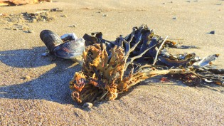 Seaweed and mussels...
