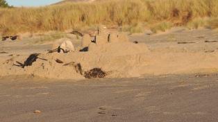 Sand castles!