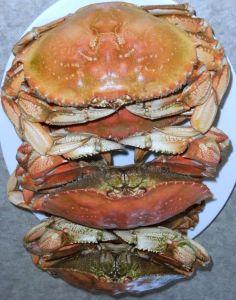 Crabs9