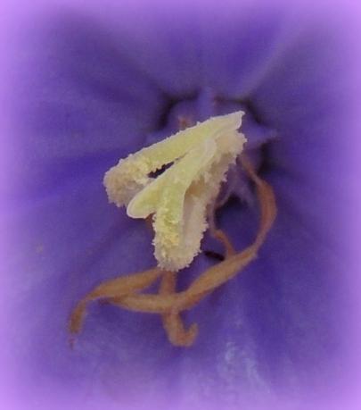 Bell Flower 523201503