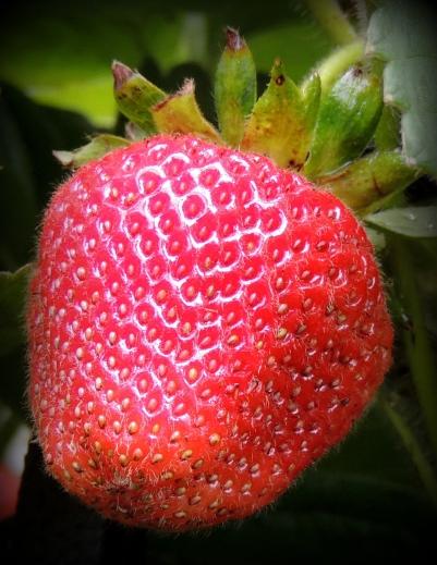 Strawberries 619201502