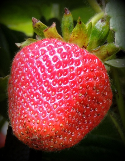 Strawberries 619201502