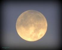 Full Moon 928201524