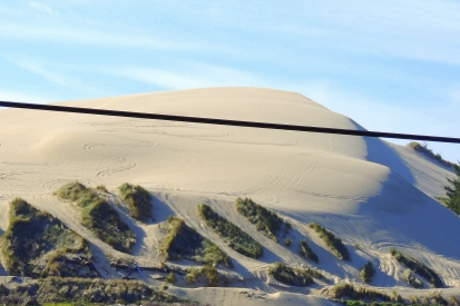 Great Dunes of Oregon 318201507