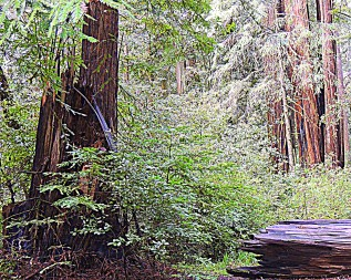 Avenue of the Giants 323201508