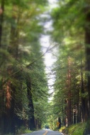 Avenue of the Giants 323201538