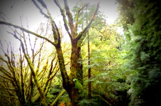 Avenue of the Giants 323201539
