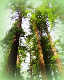 Avenue of the Giants 323201571