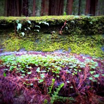 Avenue of the Giants 323201579