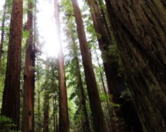 Avenue of the Giants 323201587
