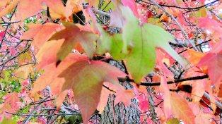 AutumnColors02