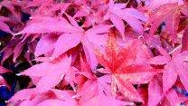 AutumnColors12
