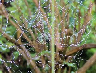 Webs01