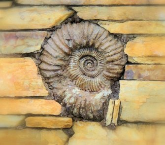 Ammonite In the Wall
