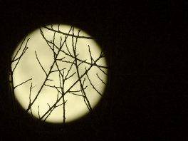 Seeing the branches for the moon...