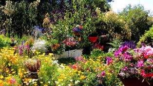 Reflection Gardens...