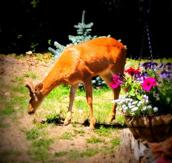 Deer innocently meandering....