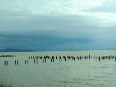 I just think pilings look neat, so I shot images of them.