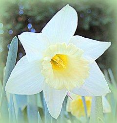Delicate whites....