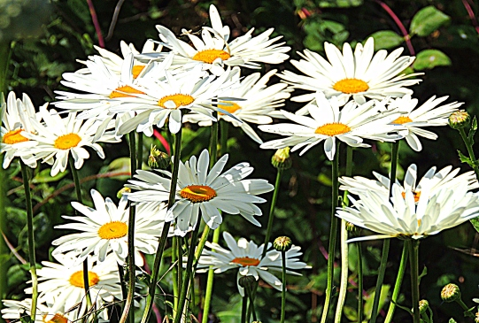 Daisy Dreams: Top 20% award for the day of 8/11/16; Top 20% award for the week of 8/7/16; Top 20% award for the month of August!
