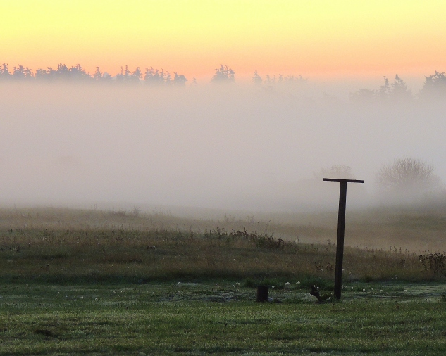 Ground Fog and Dew: Top 20% award for the day of 2/7/16...