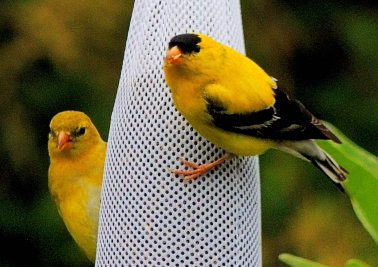 Mr. And Mrs. Goldfinch: Top 20% award for the day of 6/14/16...