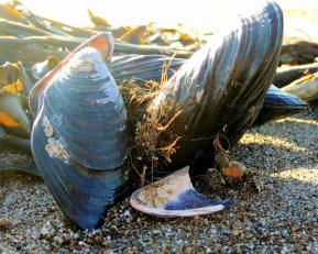 Mussel Shells And Seaweed: Top 20% award for the day of 4/22/16...