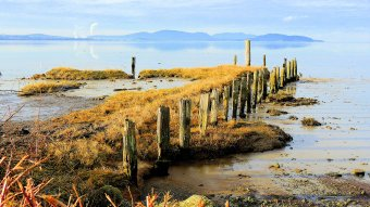 Old Dock Pilings: Top 20% award for the day of 1/14/16...
