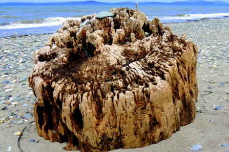 Sea Worn Stump: Top 20% award for the day of 8/11/16; Top 20% award for the week of 8/7/16; Top 20% award for the month of August!