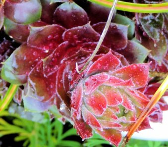 Succulents With Dew: Top 20% for the day of 1/26/16...