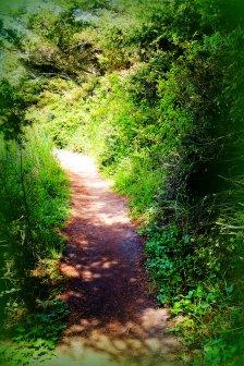 Path...