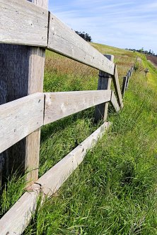 Fence Line...