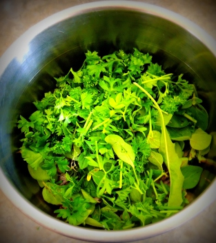 Micro green