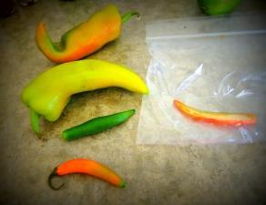 Serrano, Jalapeno, Anaheim peppers!